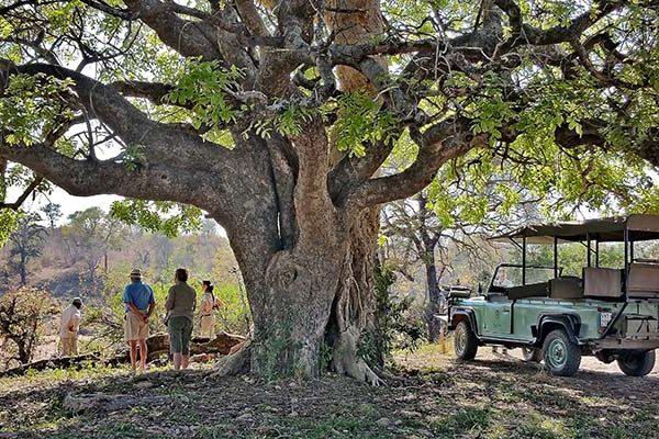 Lukimbi-safari-lodge-royal-african-discoveries-4